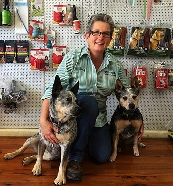 Pittsworth veterinary clinic about us