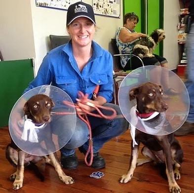 Dog Orthopedic Surgery