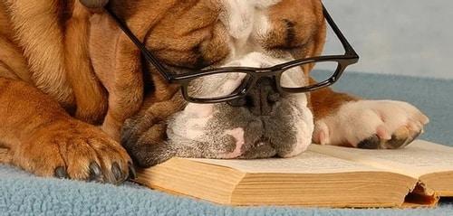 Pet Insurance Article - Dog