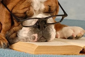 Pet insurance dog feature
