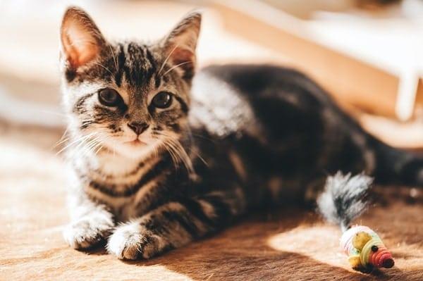 cat vet clinic services clifton