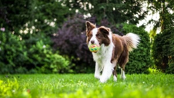 dog veterinarian southbrook