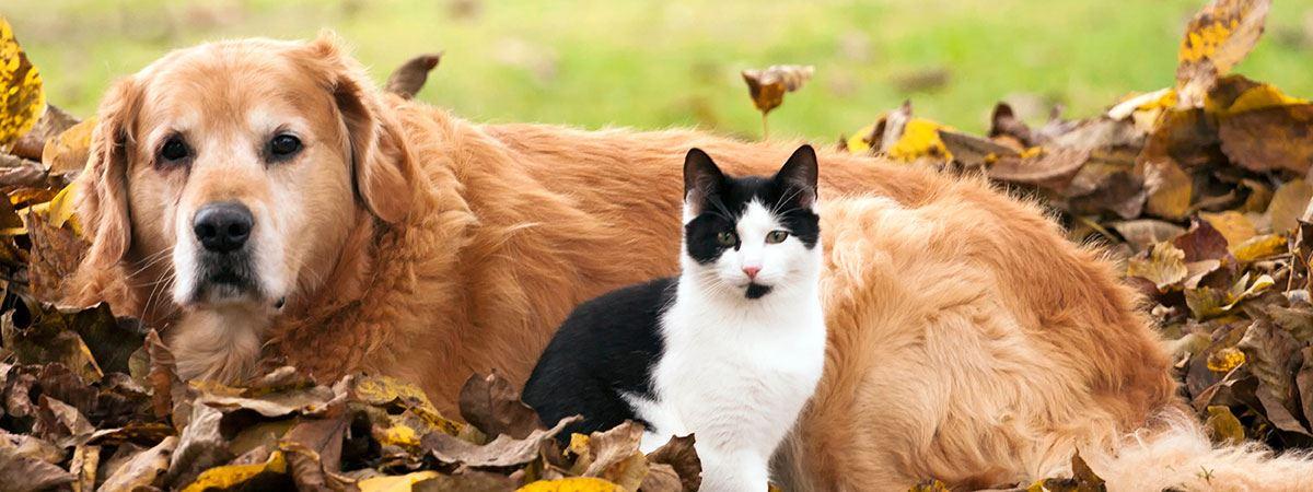 cattle in field grain poisoning
