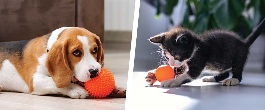 Keeping your pets active in winter